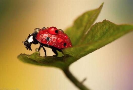 ladybugswallow-en-bcdn-biz